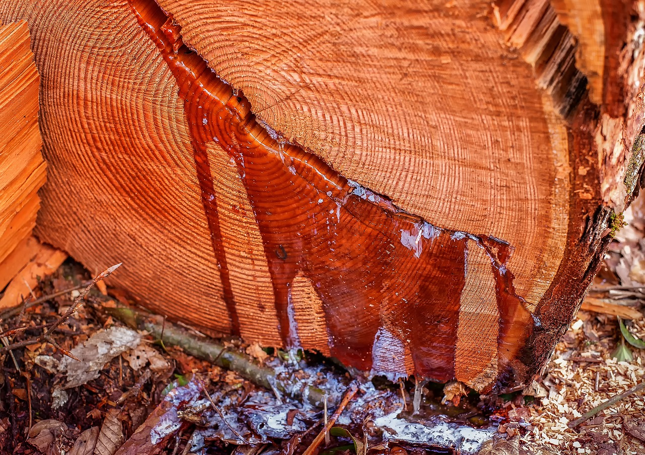 A Rundown On Tree Pruning And Removal – Why You Should Prioritize It